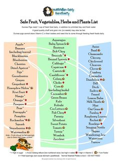 Safe Fruits, Vegetables, and Herbs list for Guinea Pigs