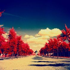 First roll of Kodak Aerochrome — lazybuddha · Lomography Amazing Photography, Nature Photography, Infrared Photography, Red Tree, Dream Art, Lomography, Aesthetic Backgrounds, Color Of Life, Beautiful World