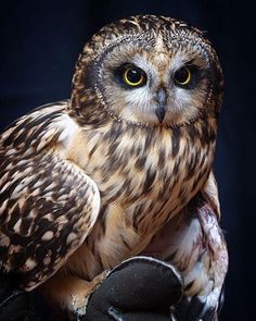 Wise and ever watchful Owl Beautiful Owl, Animals Beautiful, Cute Animals, Owl Photos, Owl Pictures, Owl Bird, Pet Birds, Tier Fotos, Mundo Animal