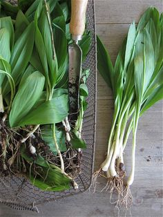 What we're making with ramps.