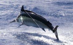 Go deep sea fishing and catch a marlin