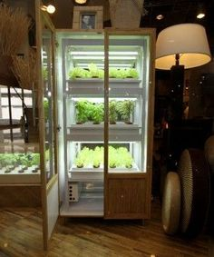 Grow Own Veggies in a Cabinet with no soil