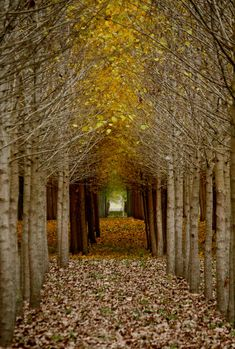 Golden Green Archway, Tree Orchard, Fairy Tale Wedding, Fall Photograph, Landscape Photography, 5x7, FPOE via Etsy.