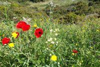 Die Wildblumen