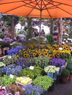 Amsterdam flower market! How much better can it get ! I'd spend my last R100 on a bunch of flowers