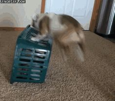 """Share this """"Dog's Basket Trick"""" animated gif image with everyone. Gif4Share is best source of Funny GIFs, Cats GIFs, Dog GIFs to Share on social networks and chat."""