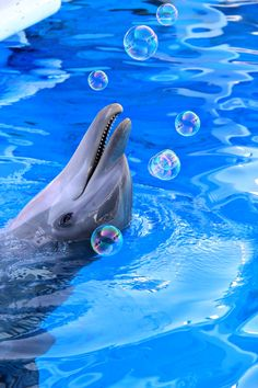 Bubbly dolphin at Clearwater Marine Aquarium