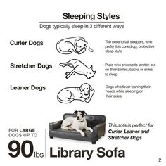 Outstanding 788 Best Dog Bed Furniture Images In 2019 Dog Bed Bed Machost Co Dining Chair Design Ideas Machostcouk