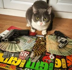 Top 10 Pictures of Thug Life Gangster Cats  ...He's still pussy from the block!  #caturday #thuglife #Gangster