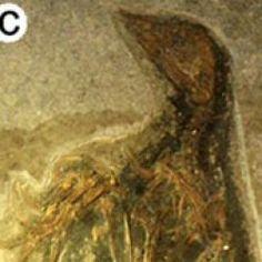 Animal 'Pompeii' Captured Dinos, Mammals, Birds in Death : DNews