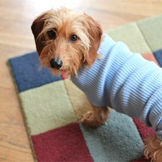 Make an easy (no-sew!) dog sweater for a small dog by upcycling an old sweater.