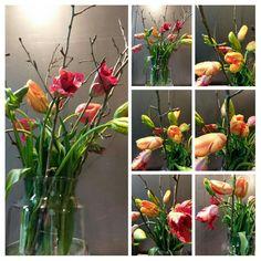 Plants, Tulips, Flora, Plant