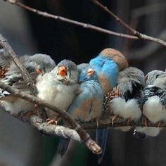 http://www.buzzfeed.com/expresident/bird-huddles?s=mobile