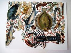 Vintage-Die-Cuts-of-Sea-Creatures-Seahorse-Lobster-Turtle-Swordfish-N