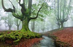 Conocido oficialmente como Parque Natural del Gorbea, este idílico paisaje está situado entre las provincias de Álava y Vizcaya en el Euskadi, en el norte