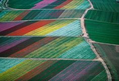 Amazing Aerial Photography - Colorful fields of flowers in Carlsbad, Calif., in 1989.