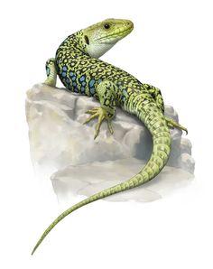 Ilustración Científica Reptiles. ilustraciones de Lagartos, tortugas, reptiles. ilustracion naturaleza,