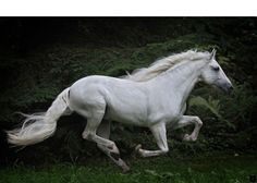 The most important role of equestrian clothing is for security Although horses can be trained they can be unforeseeable when provoked. Riders are susceptible while riding and handling horses, espec… All The Pretty Horses, Beautiful Horses, Animals Beautiful, Horse Galloping, Andalusian Horse, Horse Photos, Horse Pictures, White Horses, Dapple Grey Horses