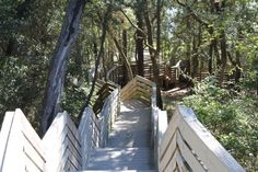 Bay Bluffs Preserve...Awesome nature trails for a family outing!!