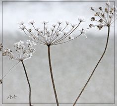 """"""" at the time of new snow"""" by Aili A. Finland"""