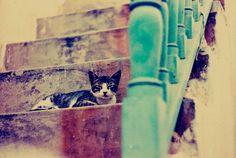 Cat in Paros island, Greece