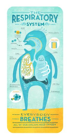 The Respiratory System by Rachel Ignotofsky. $23.00, via Etsy.