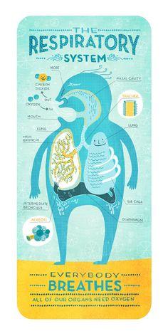 The Respiratory System by Rachel Ignotofsky. $23.00, via Etsy.