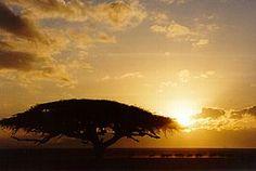 Sonnenuntergang©A.Gabanyi