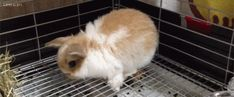 They have the most adorable bun bun mannerisms: | 21 Reasons Why Bunnies Are Actually The Best Pets