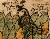 Väderfölne', fornvästnordiska Veðrfǫlnir (vindfalnade, Vedfolnir), är i nordisk mytologi en hök som sitter mellan ögonen på örnen i världsträdet Yggdrasils topp, enligt Snorres Edda. Väderfölne är den som har sin plats högst upp i världen och har därför av all vind och sol tappat sin färg. https://sv.wikipedia.org/wiki/H%C3%B6kar Hräsvelg ingår i en särskild grupp av jättar, närmast kosmiska väsen, som, för människan och världsalltet, symboliserar farliga makter. Till dessa räknas förutom…