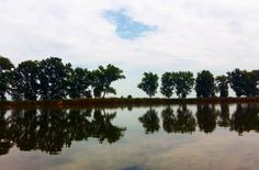 Szajolba, a kert végében a Holt-Tisza ⛅ #nature #naturelove #lake #szajol #trees #beautiful #landscape #watersurface #sky #summertime #outdoor #home Land Scape, Reflection, River, Instagram Posts, Outdoor, Beautiful, Mirrors, Outdoors, Outdoor Games