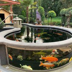 Check out this Amazing above ground Koi Pond. Fish Pond Gardens, Koi Fish Pond, Ideas Estanque, Pond Ideas, Fish Ponds Backyard, Koi Ponds, Outdoor Fish Ponds, Garden Pond Design, Pond Landscaping