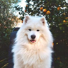 Funnycuteanimals — My handsome floof. via /r/aww...