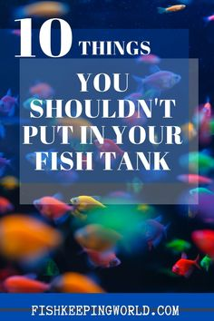 10 Things You Shouldn't Put In Your Fish Tank - Fishkeeping World Tropical Aquarium, Saltwater Aquarium, Aquarium Fish, Aquarium Decorations, Aquarium Ideas, 10 Gallon Fish Tank, Biotope Aquarium, Fishing For Beginners, Fish Care