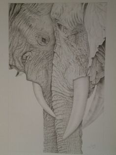 Gentle Giants by Tracey Fyffe, I loved drawing this