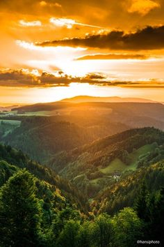 Golden Hour in the Black Forest. Southern Germany [OC][4000x6000] : EarthPorn