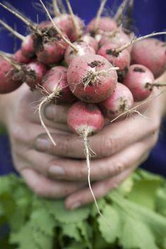 Experternas råd att tänka på för ev ny köksträdgård.
