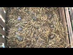 Καλλιέργεια πατάτας σὲ παλέτα - YouTube