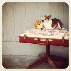 SALE NOW 95 WAS 250 Upcycled Vintage Suit Case Dog Bed by MannieP, $95.00