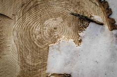 Wood Grain Photo Slice Winter Cold