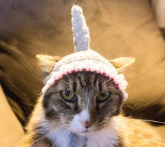 Shark Costume Hat for Cats Ready To Ship by DandoisLionDeLights