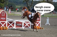 Imagine your dog's antics in the body of a horse...some  hilarious and interesting mayhem would result. #LOL #TwoHearts #Eventing