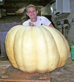 Giant pumpkins | Georgia FACES | UGA