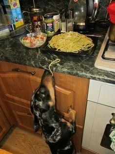 Tiempo de almuerzo... le hecharé una probadita... !!!