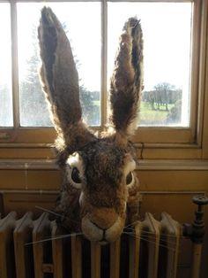 Tim Walker rabbit head