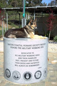 """""""The average Military Working Dog saves 150 lives during its time in service,"""" http://www.dogheirs.com/elleng/posts/1245-honoring-military-working-dogs-for-memorial-day#"""