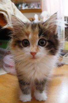 @imuzak1106s おはようございます。新人子猫の三毛さんも出勤してるんですか。