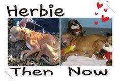 Herbie 20-12-12http://www.indiegogo.com/helpherbie?c=home Please still keep giving..