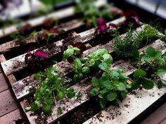 pallet vegetable garden   nate.
