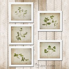 Herb Print Set of 5 Country Kitchen Art Rustic by AgedPage on Etsy